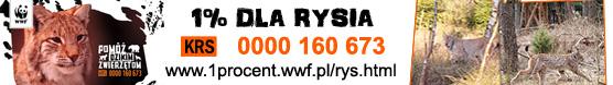 Konkurs WWF - Nazwij i wygraj Rysia